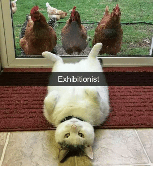 an exhibitionist pussy cat enjoys teasing some vouyeuristic cocks